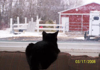 Merlin kitty watches the snow at raindance farms